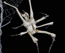 arachnida-machina