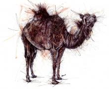 Camel Standing. Framed size 950x745mm