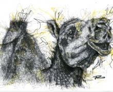 Camel. Framed size 575x450mm
