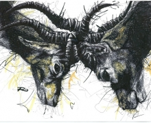 Ibex. Framed size 575x450mm