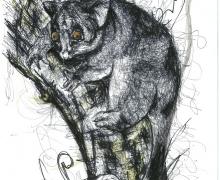 Possum. Framed size 450x575mm